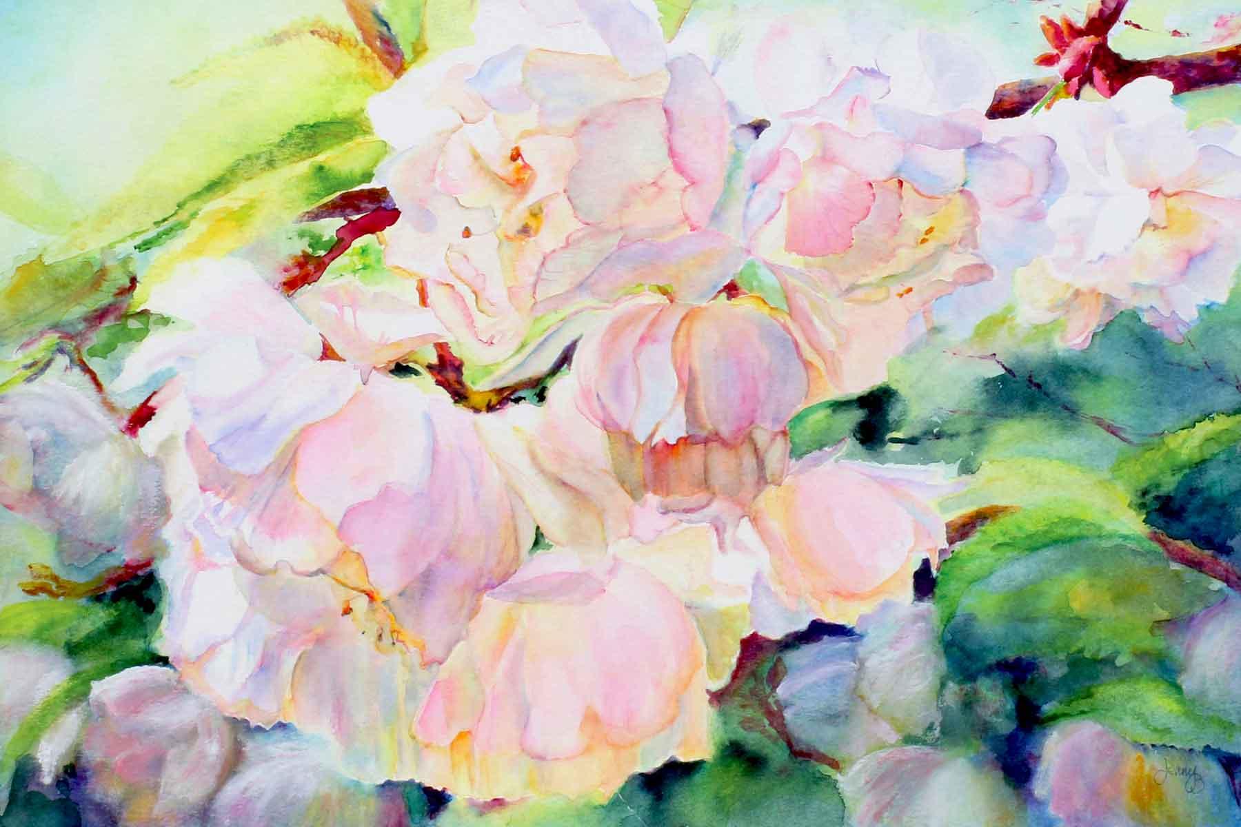 Jenny Brown - Sunlit Cherry Blossom